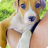Adopt A Pet :: Winchester cutie - Sacramento, CA