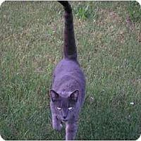 Adopt A Pet :: Clyde - Quincy, MA