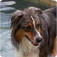 Adopt A Pet :: Koda - Orlando, FL