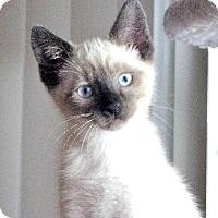Adopt A Pet :: Trouble - Davis, CA