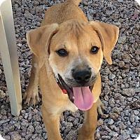 Adopt A Pet :: Mario - Phoenix, AZ