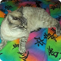 Adopt A Pet :: Jasmin - Modesto, CA