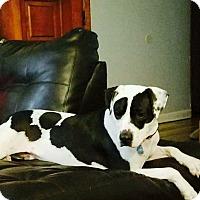 Adopt A Pet :: Diesel - Washington, PA