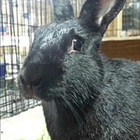 Adopt A Pet :: Shannon - Williston, FL