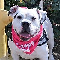 Adopt A Pet :: Cookie - Sherman Oaks, CA