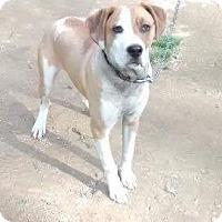 Adopt A Pet :: Brutus - Sioux Falls, SD
