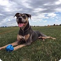 Adopt A Pet :: Skye - Joliet, IL