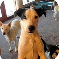 Adopt A Pet :: Jonny Lee - Santa Fe, NM