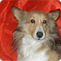 Adopt A Pet :: Faith ADOPTED!! - Antioch, IL