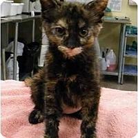 Adopt A Pet :: Peppercorn - Modesto, CA