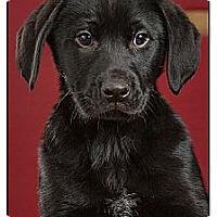 Adopt A Pet :: Damon - Owensboro, KY