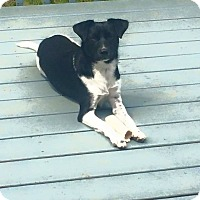 Adopt A Pet :: Annie - bridgeport, CT