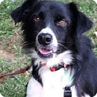 Adopt A Pet :: Ruthie - Oliver Springs, TN