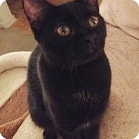 Adopt A Pet :: Roary - North Highlands, CA