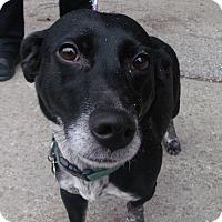 Adopt A Pet :: Dottie - Muskegon, MI