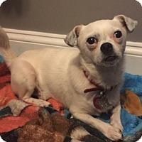 Adopt A Pet :: Poppy - Hayes, VA