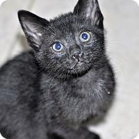 Adopt A Pet :: Camry (Purr machine) - New Smyrna Beach, FL