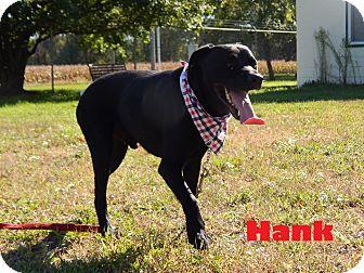 Labrador Retriever/Rottweiler Mix Dog for adoption in Bucyrus, Ohio - Hank