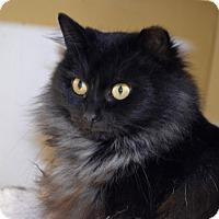Adopt A Pet :: Echo - Byron Center, MI