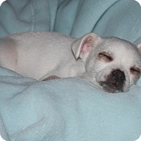 Adopt A Pet :: Victor - Henderson, NV