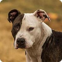 Adopt A Pet :: Mimi - chouteau, OK