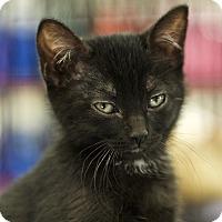 Adopt A Pet :: Rayne - Great Falls, MT
