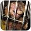 Photo 4 - Yorkie, Yorkshire Terrier Puppy for adoption in West Palm Beach, Florida - Sandee