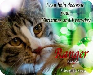 Domestic Shorthair Cat for adoption in Norman, Oklahoma - Ranger