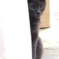 Adopt A Pet :: Crash - Monroe, GA