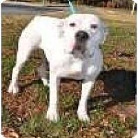 Adopt A Pet :: Cookey - Winder, GA