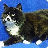 Adopt A Pet :: Fluffy - East Hanover, NJ