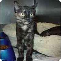 Adopt A Pet :: Jasmine & Lotus - Arlington, VA