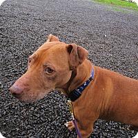 Adopt A Pet :: Pete - Tillamook, OR