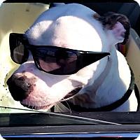 Adopt A Pet :: Junior - Bastrop, TX