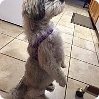 Adopt A Pet :: SAMMY - Eden Prairie, MN