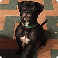 Adopt A Pet :: Ella - Stahlstown, PA