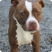 Adopt A Pet :: Ryle - Greensboro, NC
