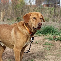 Adopt A Pet :: Red - Charlotte, NC