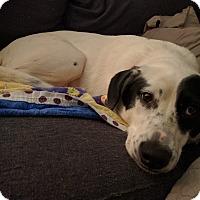 Adopt A Pet :: Rella - Manassas, VA