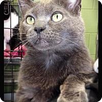 Adopt A Pet :: Jitterbug - Hartford City, IN
