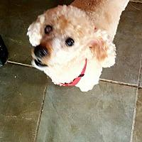 Adopt A Pet :: Jack - Freeport, NY