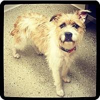 Adopt A Pet :: Paisley - Grand Bay, AL