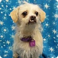Adopt A Pet :: Bumble - Mukwonago, WI
