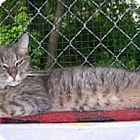 Adopt A Pet :: Isis - Dover, OH