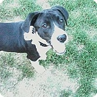 Border Collie/Hound (Unknown Type) Mix Dog for adoption in Ponca City, Oklahoma - Benny
