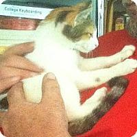 Adopt A Pet :: Miss Beasley - Gibsonton, FL