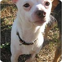 Adopt A Pet :: Peanut - Seattle, WA