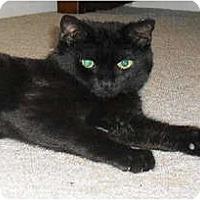 Adopt A Pet :: Bear - Warminster, PA