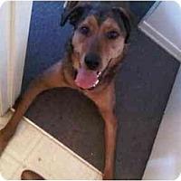 Adopt A Pet :: CalvinPENDING - Toronto/Etobicoke/GTA, ON