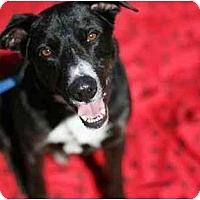 Adopt A Pet :: Cooper! - Los Angeles, CA